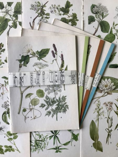 5 Wild Flowers Book Pages